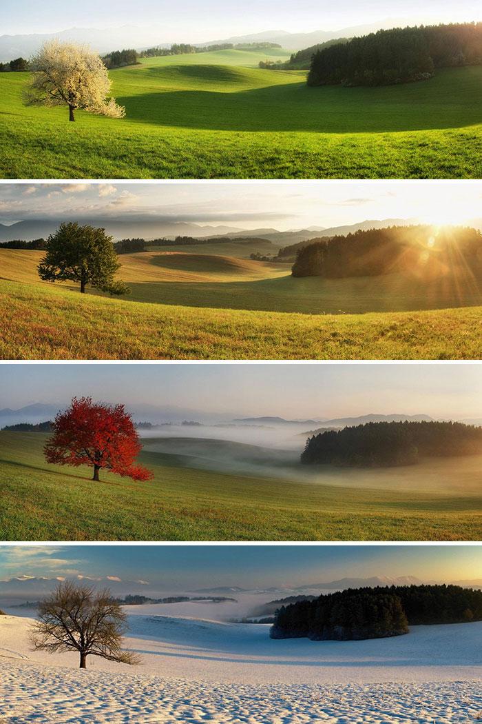 Mismo árbol, distintas estaciones