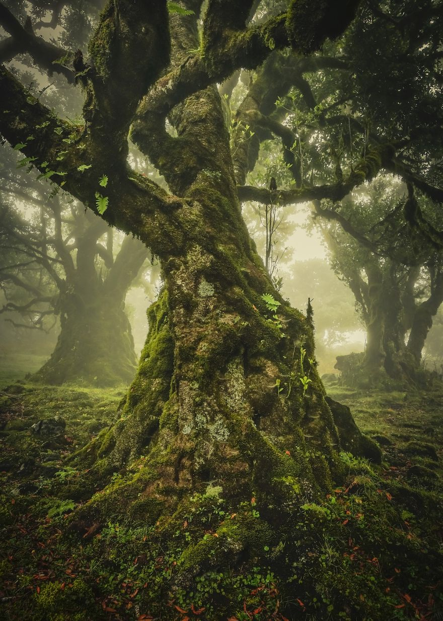 The Lone Tree Award: Madeira, Portugal By Anke Butawitsch