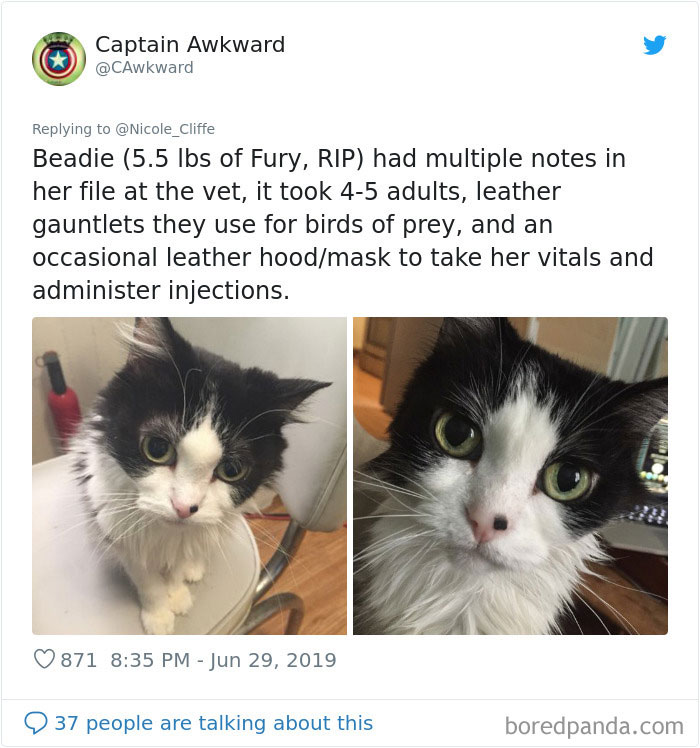 Mean-Cats-Owners-Stories