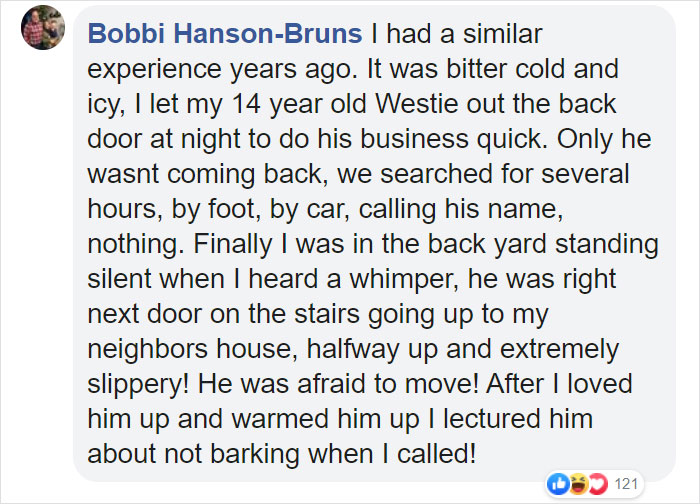 Dog Goes Missing One Evening, Turns Out He Got Stuck In His Own Poop And Wouldn't Move Or Speak