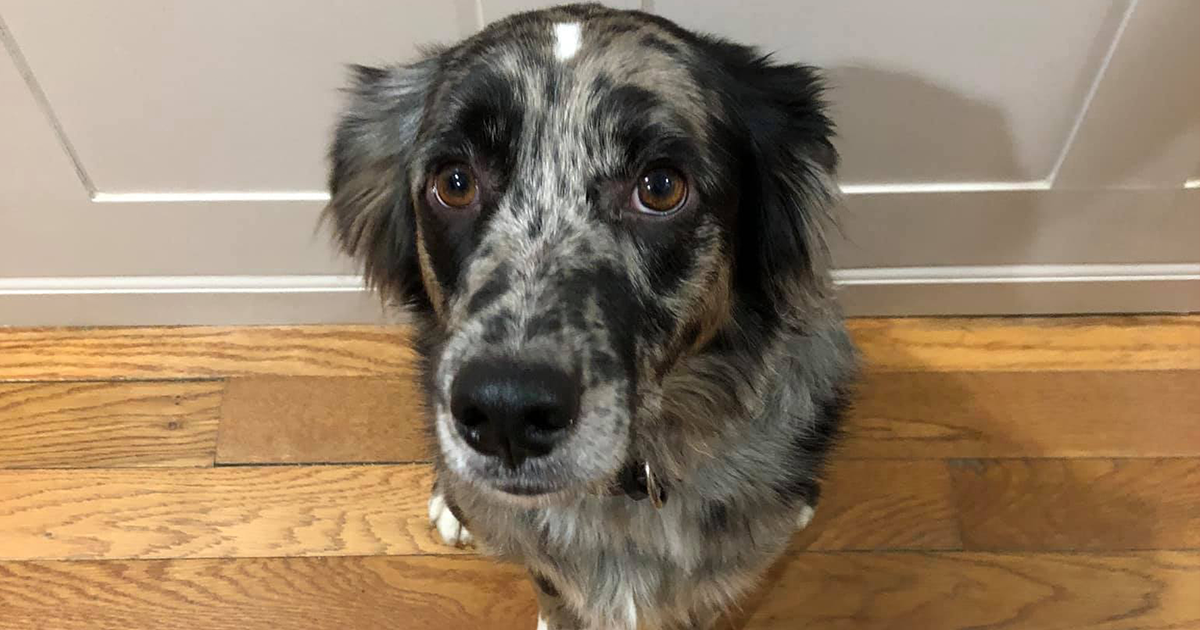 Owner Looks For Missing Dog, Turns Out The Dog Was Just Stuck In His Own Poop