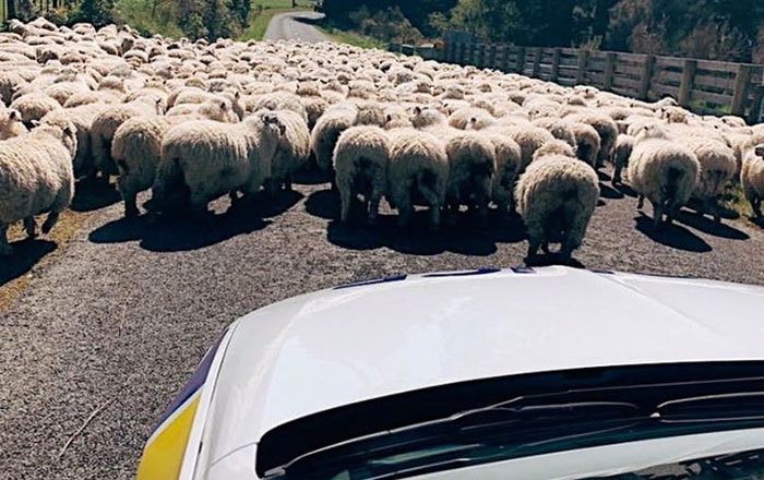 The New Zealand Police Is Winning Over The Internet With Their Adorable And Funny Posts (30 Pics)
