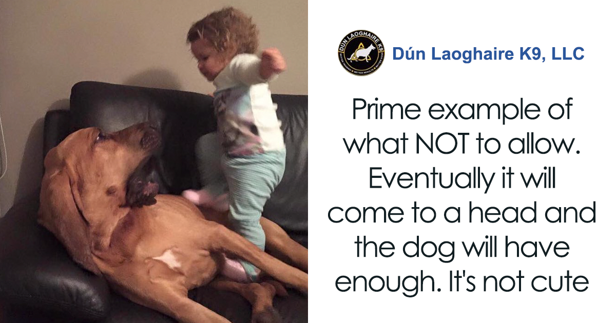 People Fed Up With Parents Letting Their Kids Mistreat Pets Explain How Dangerous It Is