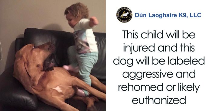 People Tired Of Others Allowing Children To Mistreat Pets Explain How Dumb And Dangerous That Is