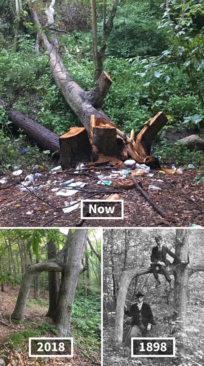 """Hamden's Historic """"Door Tree,"""" A Natural Feature Celebrated For Nearly 150 Years, Has Been Cut Down By Vandals"""