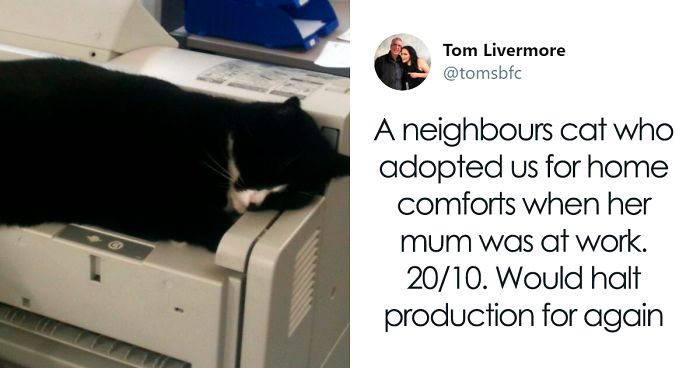 Twitter Account Encourages People To Rate The Cats They Meet On The Streets And It's Purrfect (30 Pics)