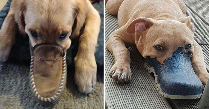 People Are Sharing Pics Of 'The Platypus' Dog To Brighten Up Their Day (30 Pics)