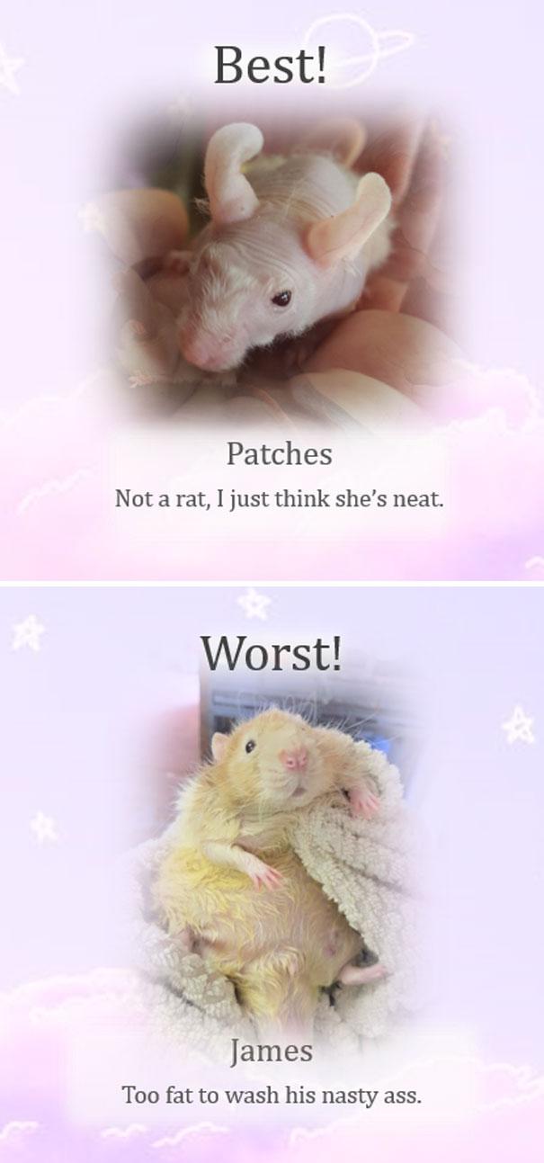 Rat Of The Week