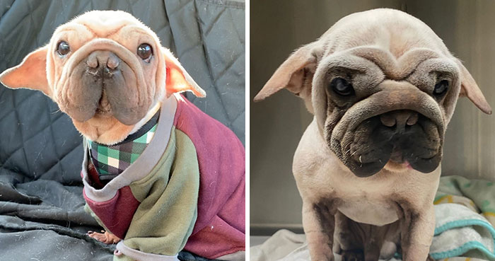 Meet Mork, A Puppy That Was Saved From A Slaughterhouse And Looks Like Baby Yoda