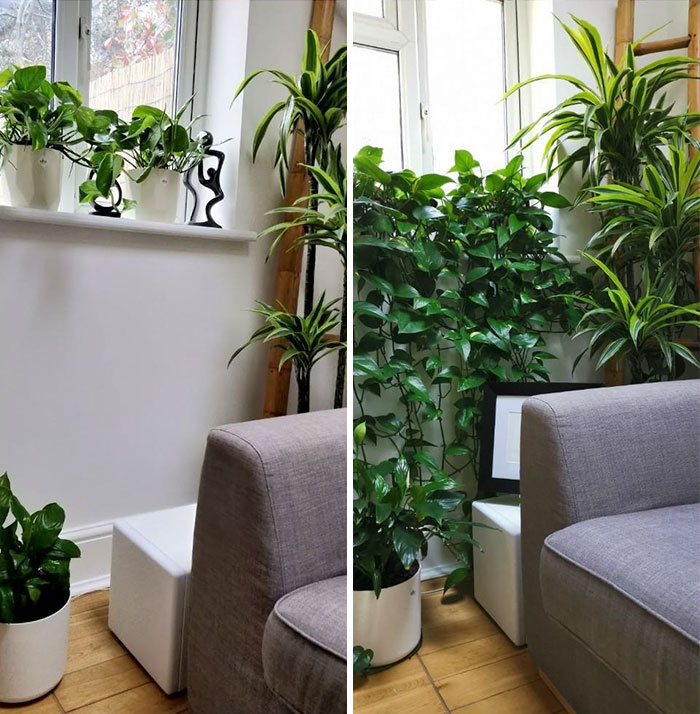 1 Year Progress. The Plants Seem To Like That Corner And So Do Our Guests (And Us Of Course)