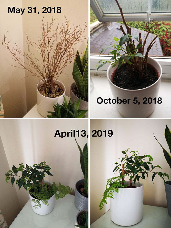 """An Old Flatmate Left This """"Dead"""" Plant Behind And I Nursed It Back To Health"""