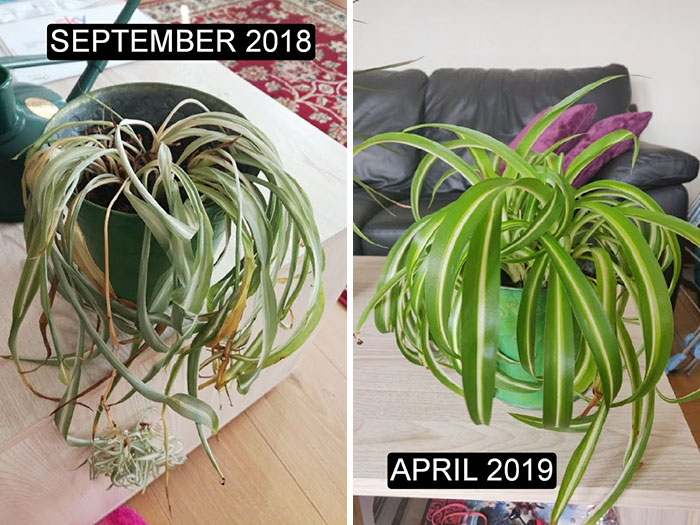 I Was Able To Save This Guy After A Rough Summer, Here It Is Now