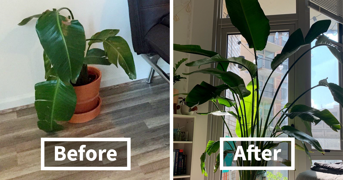 48 Amazing Comebacks By Neglected Plants