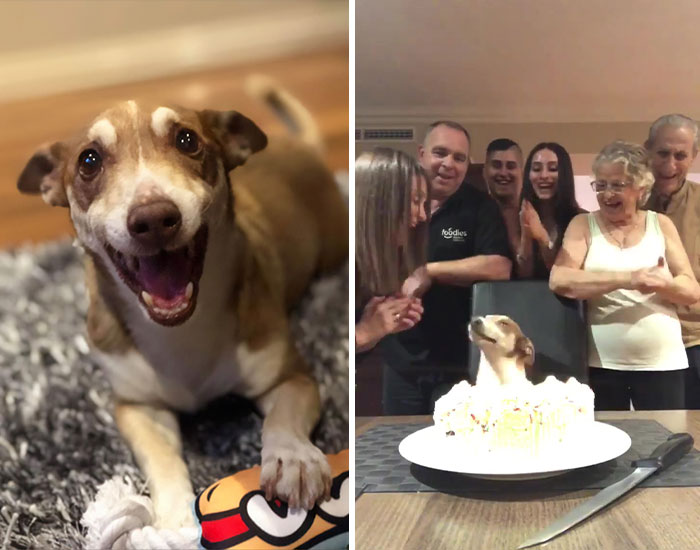 Family Throws A Surprise Birthday Party For Its 13 Y.O. Senior Dog And He Can't Believe They Remembered