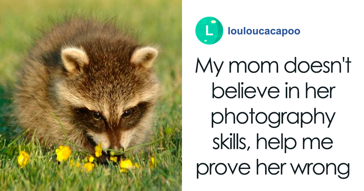 Mom Doesn't Believe Her Raccoon Photos Are Any Good, Son Posts Them Online To Prove Her Wrong