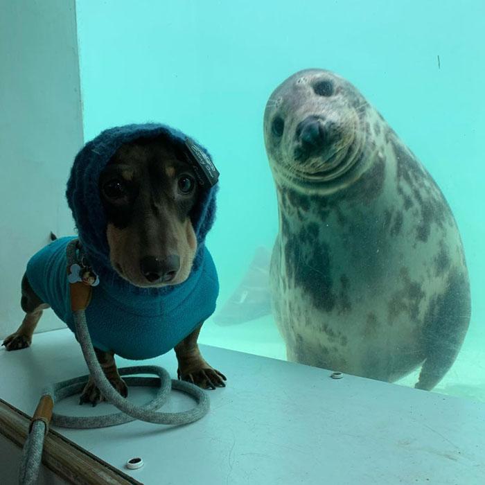 Собака и тюлень