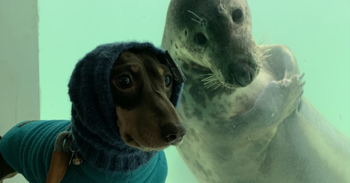 Sausage Doggy And Seal Puppy Met On Vacation, Became Bffs Immediately