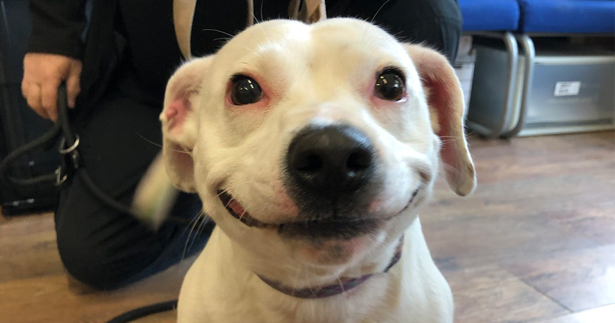 Stray Staffie Goes Viral For Her Adorable Smile, Gets Adopted Instantly