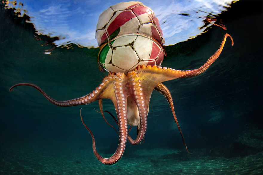 Behaviour Category Winner: 'Octopus Training' By Pasquale Vassallo, Italy