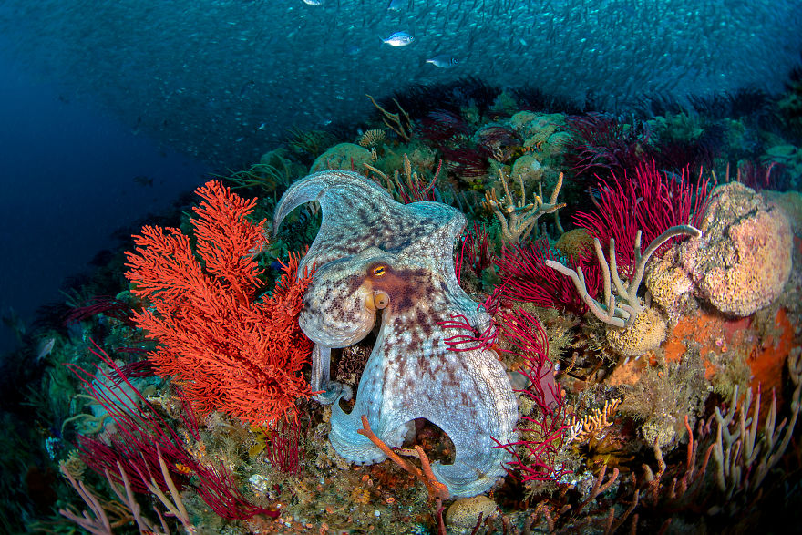 Wide Angle Category: 'Over The Reef' By Nadia Aly, USA