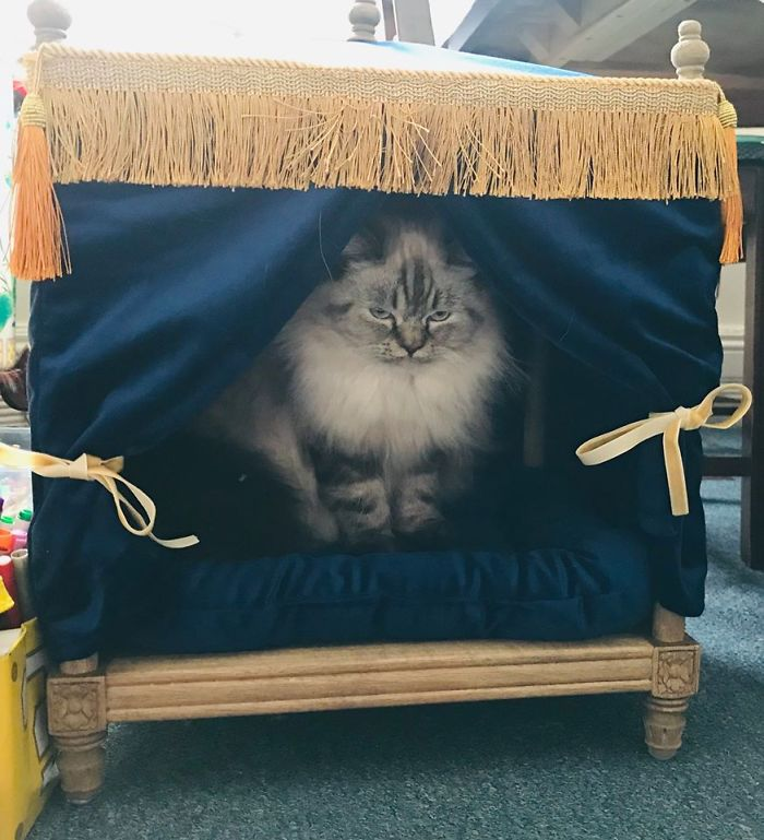 We Have A Grumpy Kitten That My Son Named Gracie. We Found This Little 4 Poster Blue Velvet Bed For Our Princess At A Store In Collingwood Ontario For A Great Marked Down Price From Its Original Cost. Needless To Say, Our Grumpy Gracie Loves Her New Bed. She Is Ameowsed With It