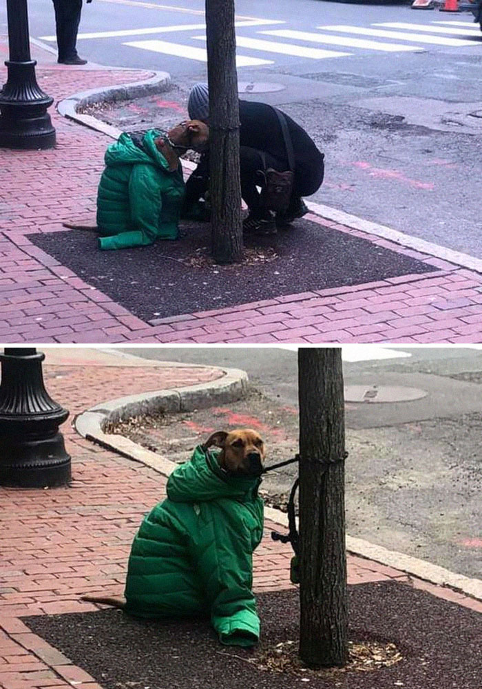 Kind Woman Gives Her Own Jacket To Her Dog Who Had To Wait Outside The Post Office In The Cold Weather