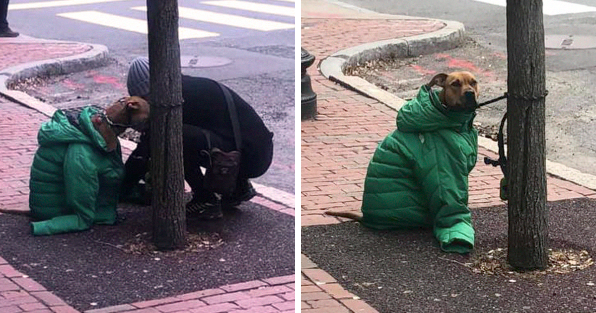 97 Wholesome Dog Posts To Warm Your Heart