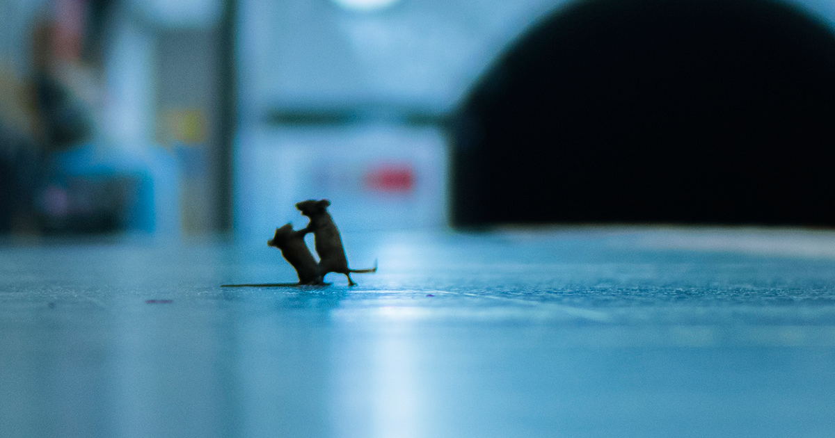 Mouse Fight On Subway Wins People's Choice For Wildlife Photographer Of The Year