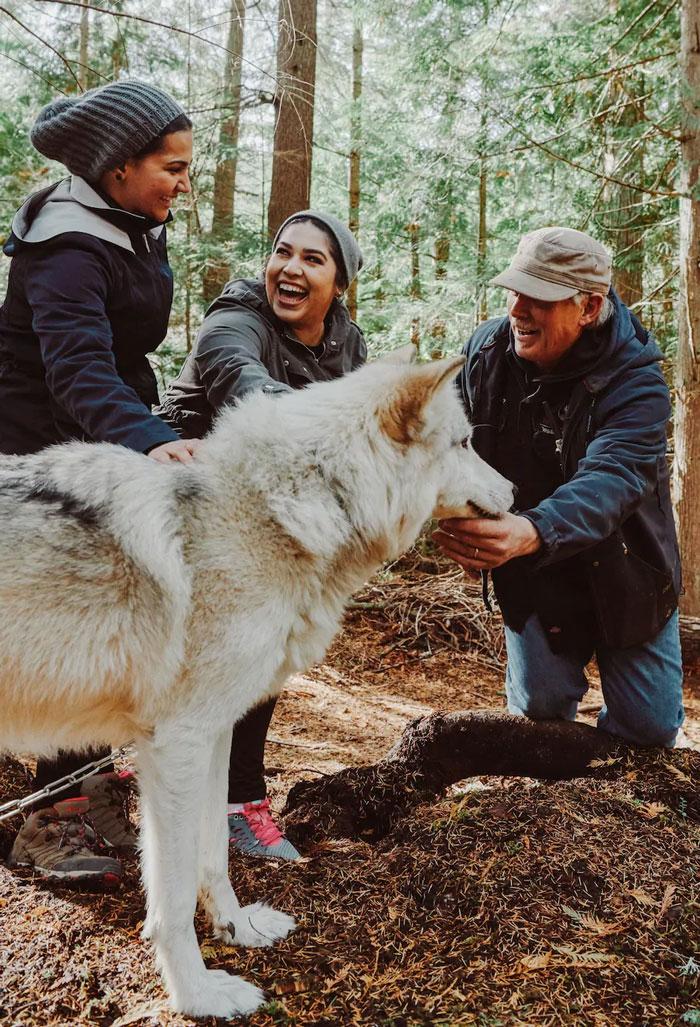 Ovaj je otok prepun prijateljskih vukova i možete ga posjetiti