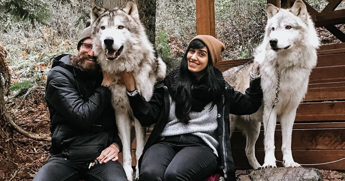 This Animal Sanctuary Near Seattle Lets You Go Walking With Wolves In The Woods