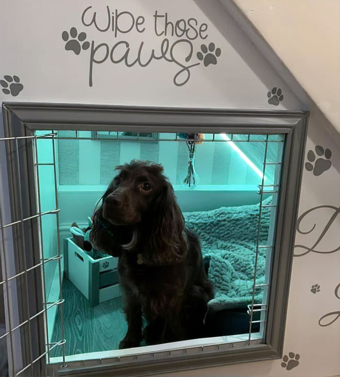 Woman Builds A Cozy Room Under The Stairs For Her Dog And The Pooch Loves It So Much That She Refuses To Leave