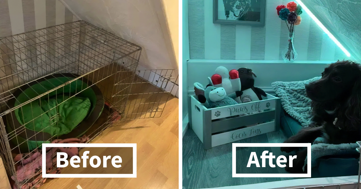 This Dog Always Slept Under The Stairs As It Made Her Safe, Owner Builds A Harry-Potter-Like Room For Her