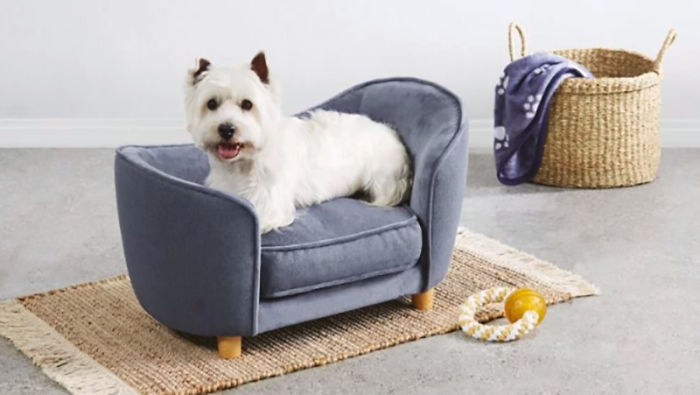 Adorable Tiny Sofas For Dogs