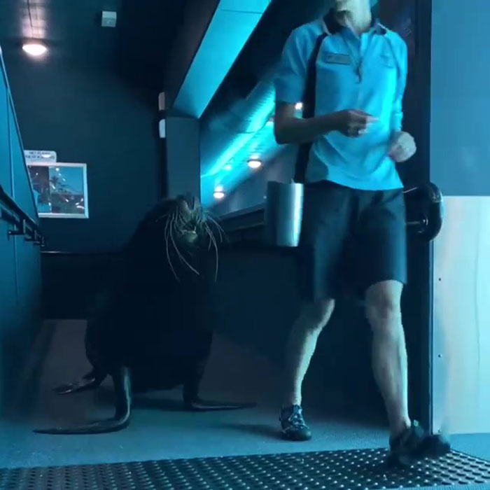 After Closing Down, This Sea World Shares The Adventures Of A Sea Lion Who Gets To Visit Other Animals At The Oceanarium