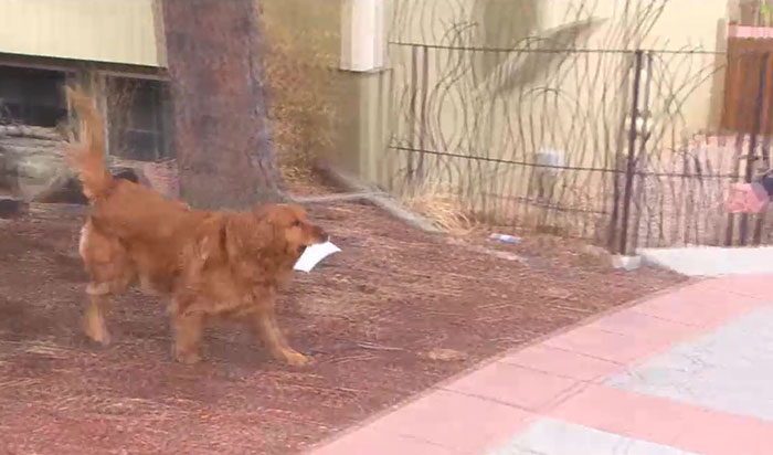 After This Elderly Woman With Respiratory Problems Had To Self-Isolate, Her Neighbor's Dog Started To Deliver Groceries To Her