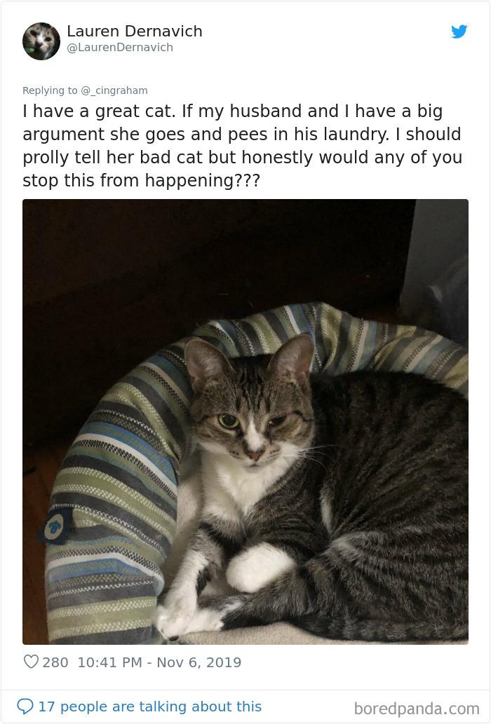 World-Worst-Cats-Christopher-Ingraham