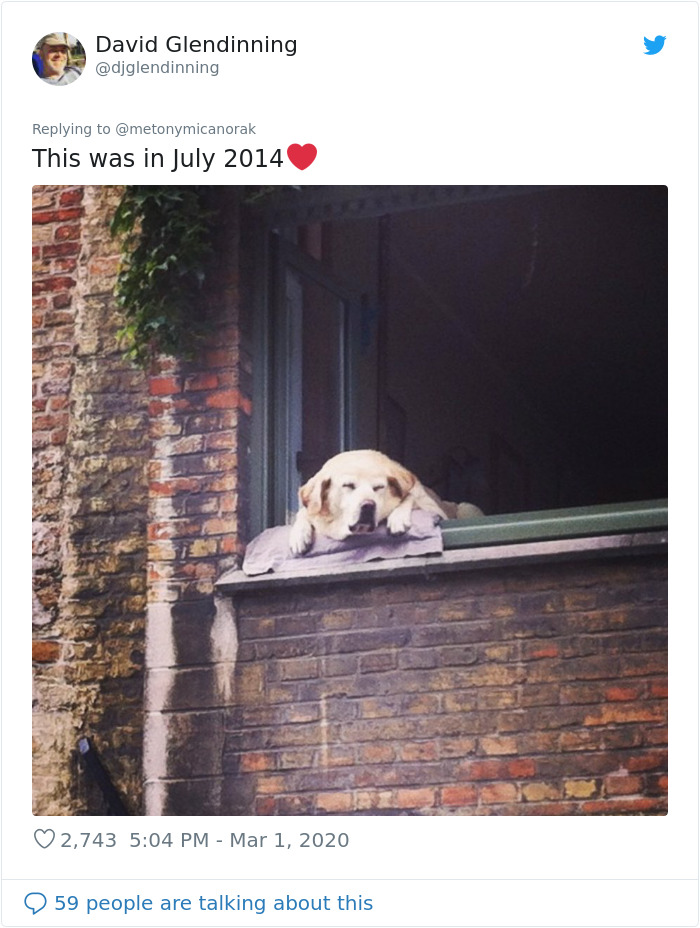 After 'The Most Photographed Dog In Bruges' Passes Away, People Are Sharing Photos Of Him Throughout The Years