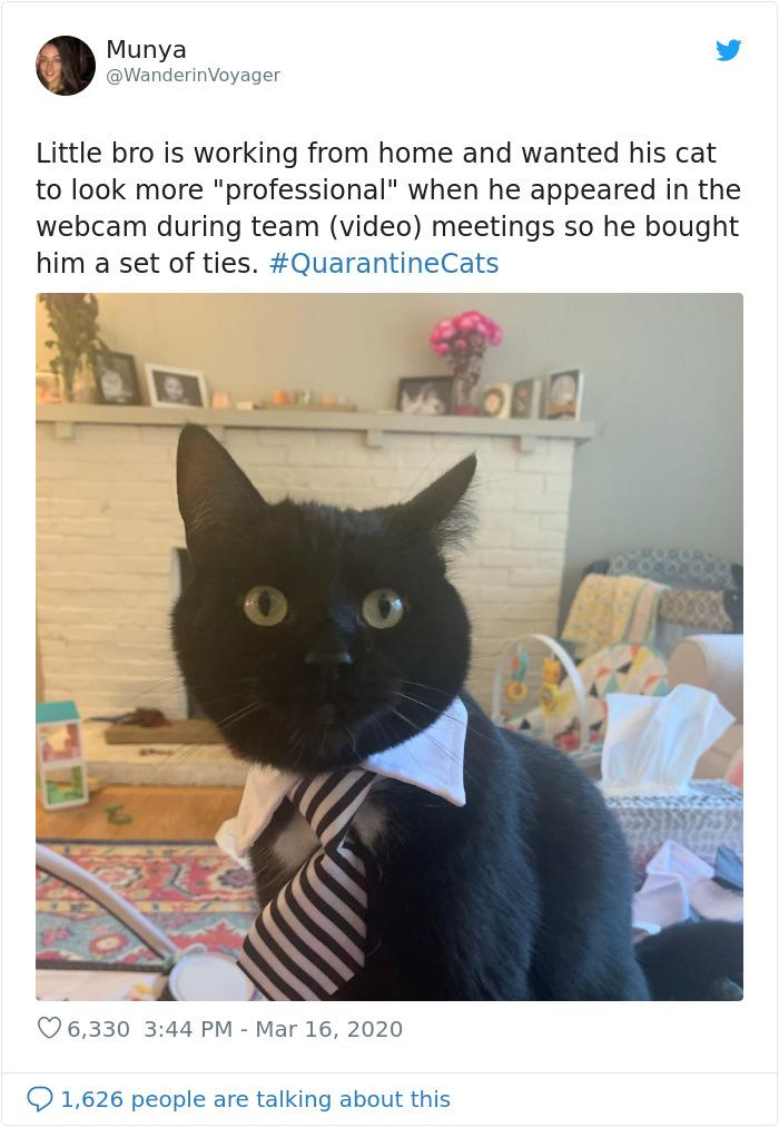 Mačka radi od kuće
