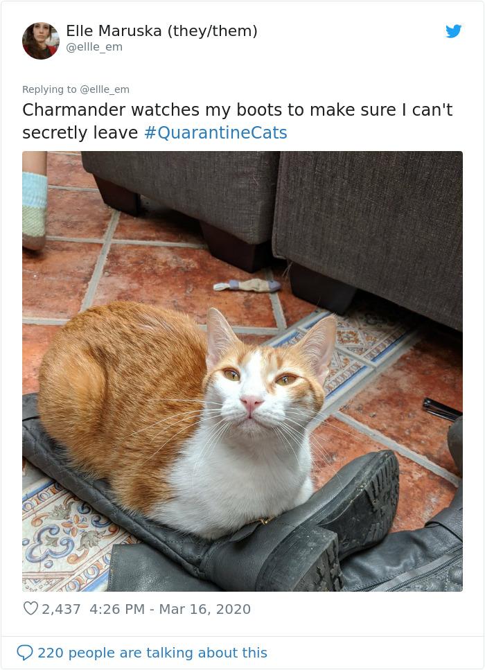 Mačka pazi da vlasnik ne uzme svoje čizme