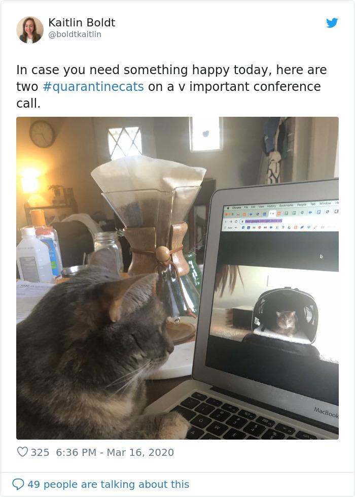 Mačka na videopozivu