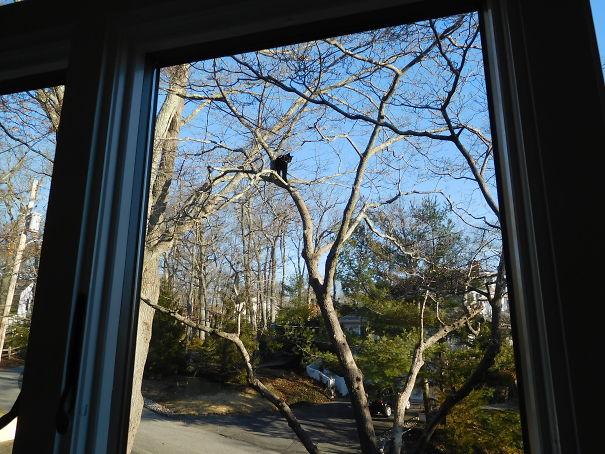 18-02-27-Blackie-Up-a-Tree-Higher-5e837e4fb7180.jpg