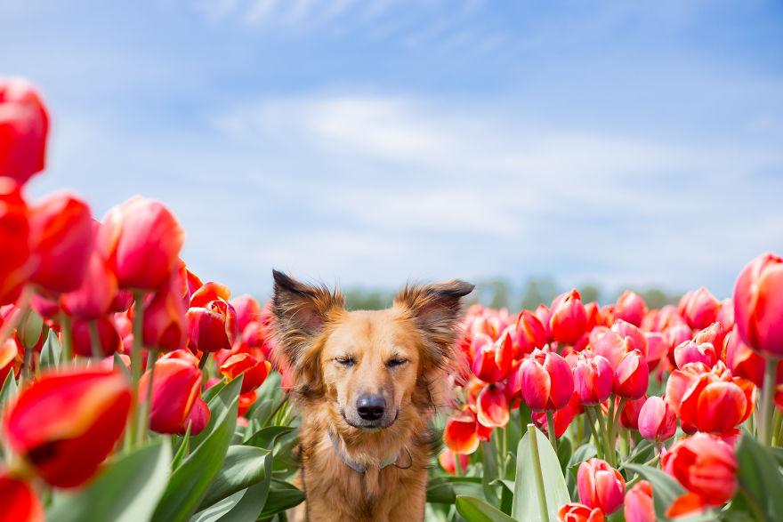 I Capture My Traumatized Rescue Dog's Happy Moments Among Flowers (22 Pics)
