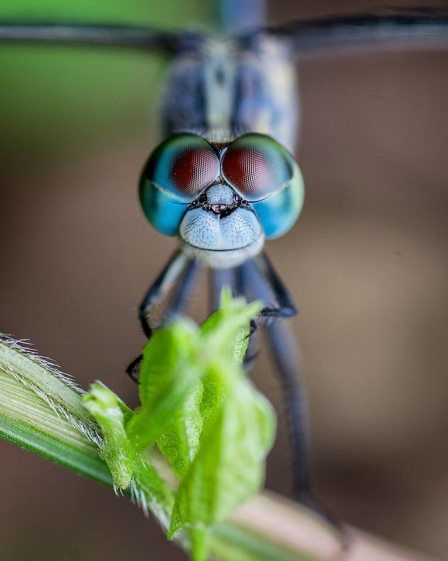 Incredible Photos Of An Indian Who Presents Insects In A Unique Way
