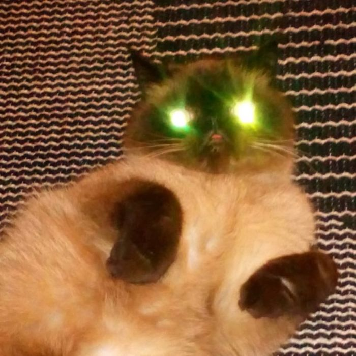 Funny-Cat-King-Of-Blep-Ikiru
