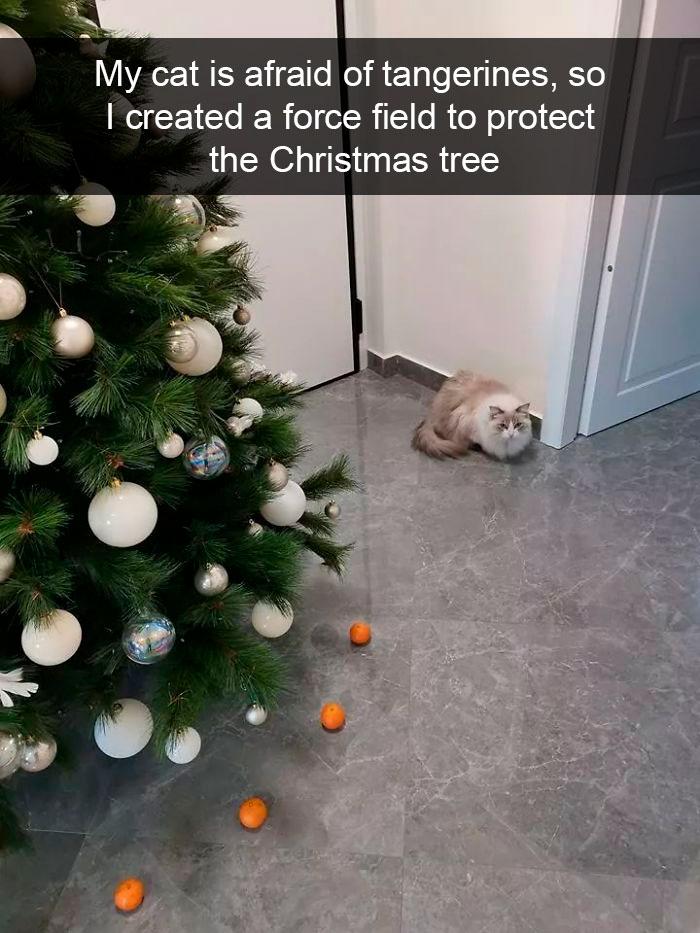 Cat-Snapchat-Funny
