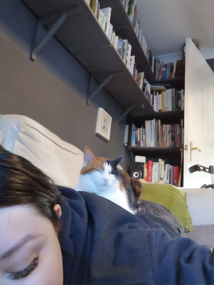 Couple Trick Their Super Clingy Cat By Creating A Fake Lap For Her To Sit On And She Loves It