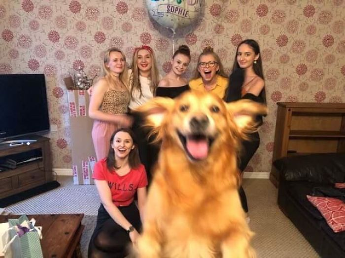 My Girlfriend And Her Friends Tried To Take A Group Photo, Alfie Wanted To Be In It As Well