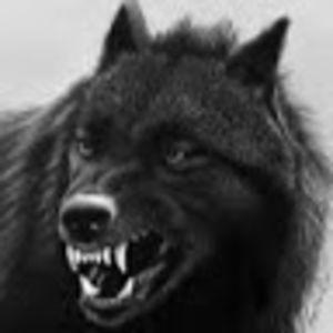 German Rottweiler#16