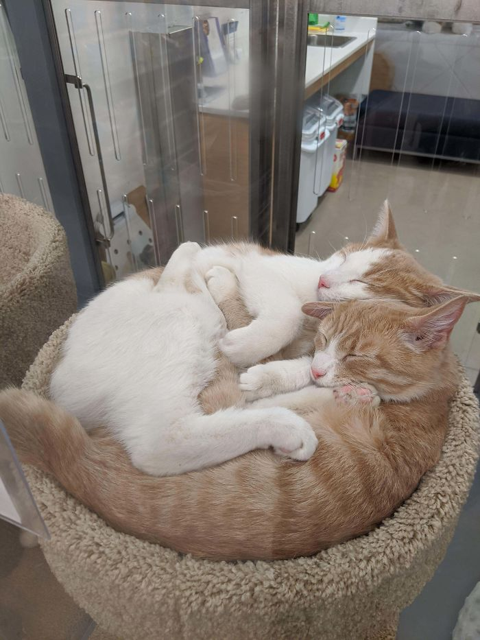 Saw These Two Boys Up For Adoption At The Local Pet Supply Store. Their Names Are Honda And Civic