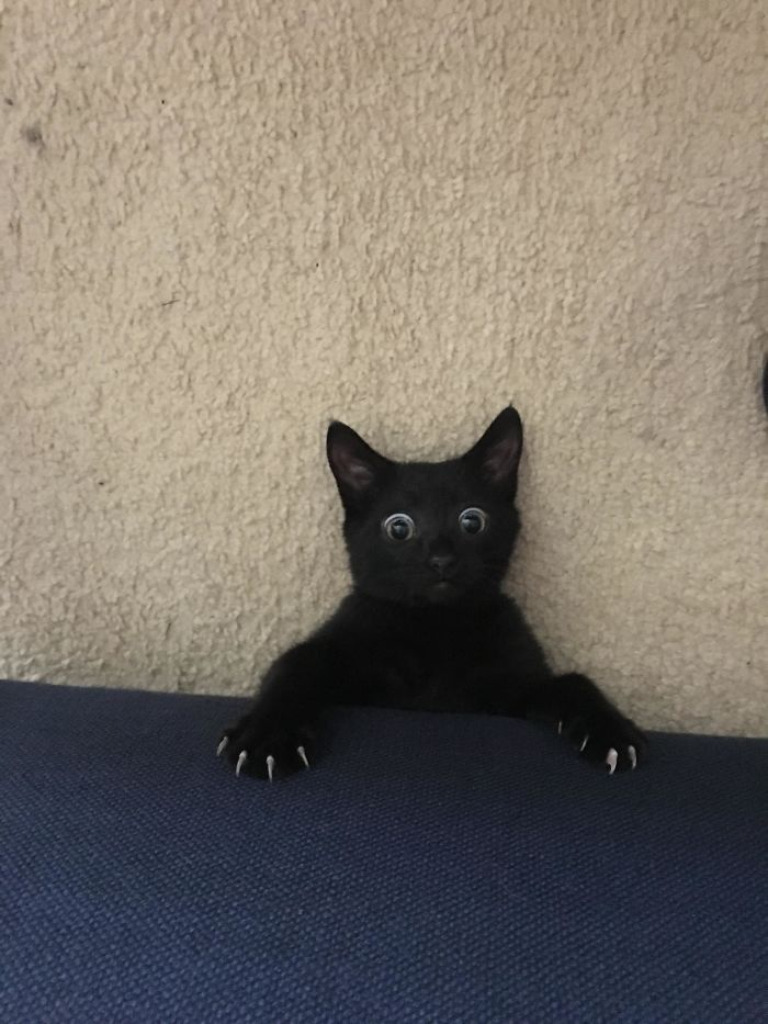 I Heard A Noise Coming From Under The Couch And This Is What I Saw When I Looked Down